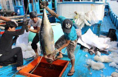 Vietnam Seafood export kuraa baeh